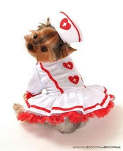 Cutie Nurse Dog Costume
