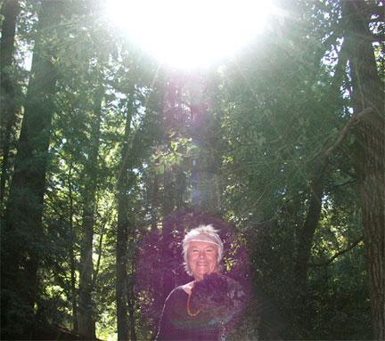 zredwoods-(1)