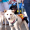 LA Is Going to the DOGS!! (and Cats too!) 2 Fundraising Events for Animals In Need!