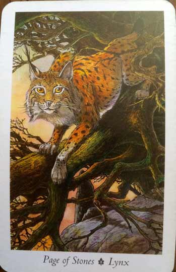 page-of-stones-lynx