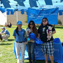 Helpful Honda Guys Cover So. CA. with Pet Adoptions, Dog Washing Events + More!