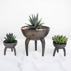 Looking for an Unusual Valentine's Gift? Petaloom Steps In with Gorgeous Plants!