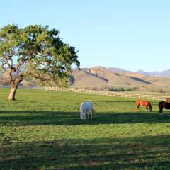 Want to Upgrade Your Valentine's Day to a Weekend Excursion? Head to Santa Ynez Valley!