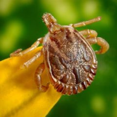Pest Control: Ways to Protect Your Pets From Pests and Bugs!By Naomi Shaw!