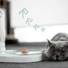 August 8 Is International Cat Day! Check out This KittySpring for Cats!